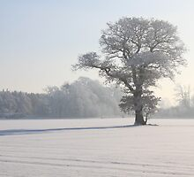 Winter by Mike Paget