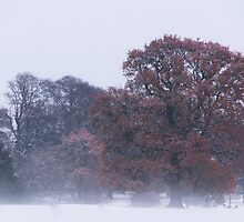 Autumn into Winter by CJTill