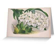 Iconagraphy of Orchids Iconographie des Orchidées Jean Jules Linden V3 1887 0174 Greeting Card