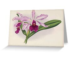Iconagraphy of Orchids Iconographie des Orchidées Jean Jules Linden V16 1900 0146 Greeting Card