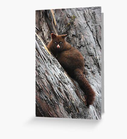 Brush Tail Possum Greeting Card