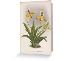 Iconagraphy of Orchids Iconographie des Orchidées Jean Jules Linden V16 1900 0130 Greeting Card