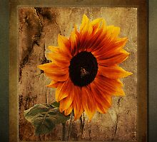 Sunflower Framed by Bel Menpes
