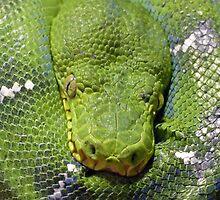 Resting Snake by DarthIndy
