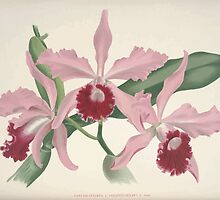 Iconagraphy of Orchids Iconographie des Orchidées Jean Jules Linden V8 V9 1895 0128 by wetdryvac