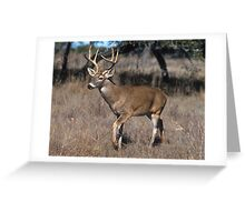 Pretty Deer Greeting Card
