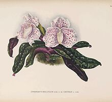 Iconagraphy of Orchids Iconographie des Orchidées Jean Jules Linden V14 1898 0188 by wetdryvac