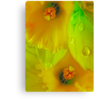 Daffodils And Raindrops Canvas Print