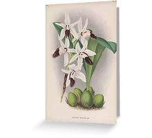 Iconagraphy of Orchids Iconographie des Orchidées Jean Jules Linden V16 1900 0078 Greeting Card