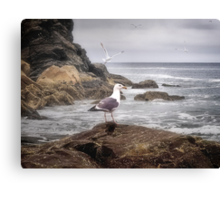 In A Mood! Canvas Print