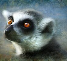 Light of the Lemur by Trudi's Images