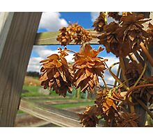 Fall at the Farm Photographic Print