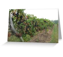 Winery Greeting Card