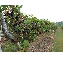 Winery Photographic Print