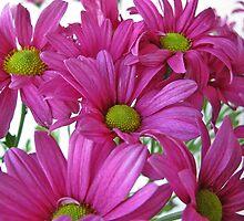Chrysanthemums! by rasim1