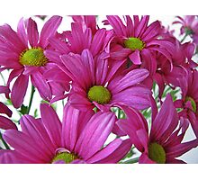 Chrysanthemums! Photographic Print