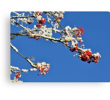 Mountain Ash In Frost Canvas Print