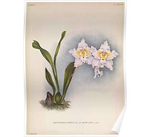 Iconagraphy of Orchids Iconographie des Orchidées Jean Jules Linden V14 1898 0046 Poster