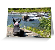 Dog watching river Greeting Card