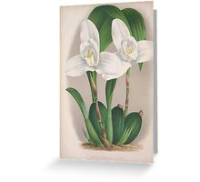 Iconagraphy of Orchids Iconographie des Orchidées Jean Jules Linden V4 1888 0046 Greeting Card