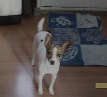 Dog. by James  Yu