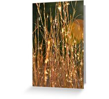 Tall dry grass Greeting Card