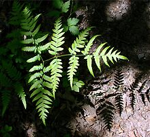 shadow and fern by Jean Gregory  Evans