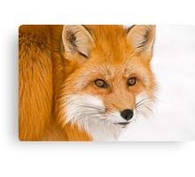 Foxey Canvas Print