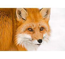 Foxey Photographic Print