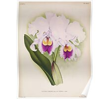 Iconagraphy of Orchids Iconographie des Orchidées Jean Jules Linden V14 1898 0168 Poster