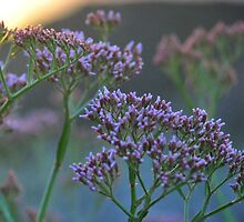 Scenic Wildflowers Against Sunset by mciren