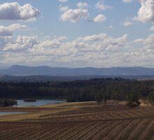 Vineyard in Australia's Hunter Wine Region by SkiCC