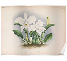 Iconagraphy of Orchids Iconographie des Orchidées Jean Jules Linden V14 1898 0010 Poster