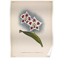 Iconagraphy of Orchids Iconographie des Orchidées Jean Jules Linden V14 1898 0080 Poster