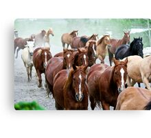 Part of the herd Canvas Print