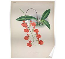 Iconagraphy of Orchids Iconographie des Orchidées Jean Jules Linden V15 1899 0010 Poster
