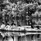 Birds on a log?  by Tyler Johnson