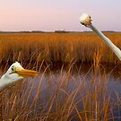 """""""Birds Eye View"""" - great egrets sneak into the picture by ArtThatSmiles"""