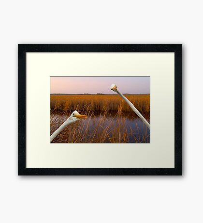 """""""Birds Eye View"""" - great egrets sneak into the picture Framed Print"""