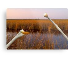 """""""Birds Eye View"""" - great egrets sneak into the picture Metal Print"""