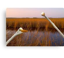 """Birds Eye View"" - great egrets sneak into the picture Canvas Print"