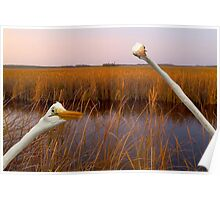 """Birds Eye View"" - great egrets sneak into the picture Poster"