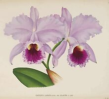 Iconagraphy of Orchids Iconographie des Orchidées Jean Jules Linden V14 1898 0116 by wetdryvac