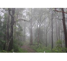Mist in the Aussie Bush Photographic Print