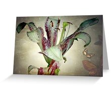 Purple lily ©  Greeting Card