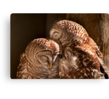 """""""In CoHoots"""" Two Barred Owls Snuggling Canvas Print"""
