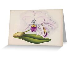 Iconagraphy of Orchids Iconographie des Orchidées Jean Jules Linden V14 1898 0034 Greeting Card