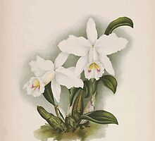 Iconagraphy of Orchids Iconographie des Orchidées Jean Jules Linden V14 1898 0140 by wetdryvac