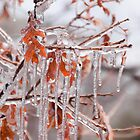 Oak leaf icicles by Morag Anderson