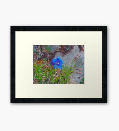 Blue Gentian - closeup Framed Print